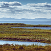 A wetland in the foreground and a large body of water with islands in the background.